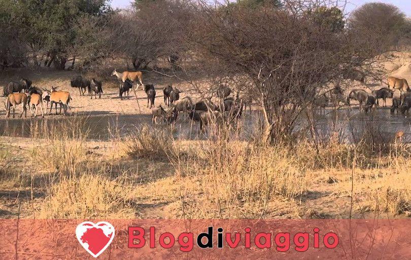 10 Parchi Nazionali più belli della Namibia