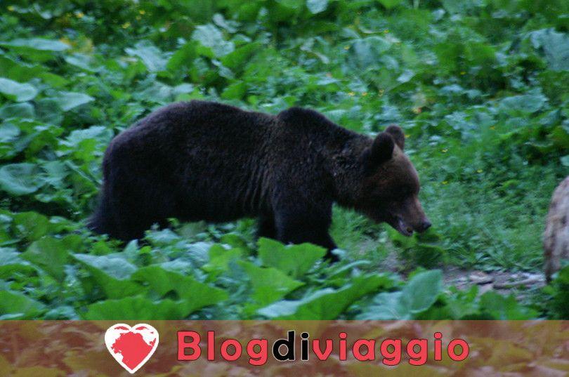 10 Destinazioni migliori per un Safari dell'Orso