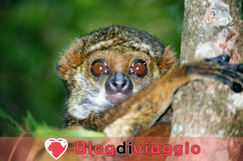 10 Principali attrazioni turistiche in Madagascar